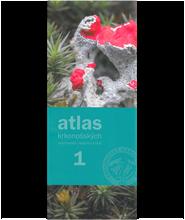 Atlas2.png